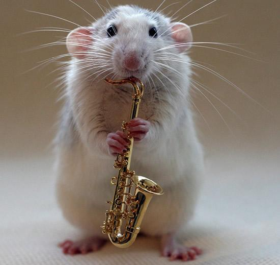 Amazing Musical School For Talented Rats (10)