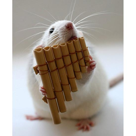 Amazing Musical School For Talented Rats (2)