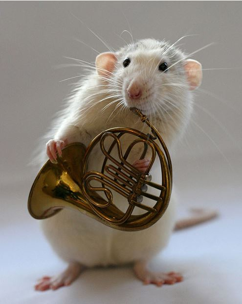 Amazing Musical School For Talented Rats (3)