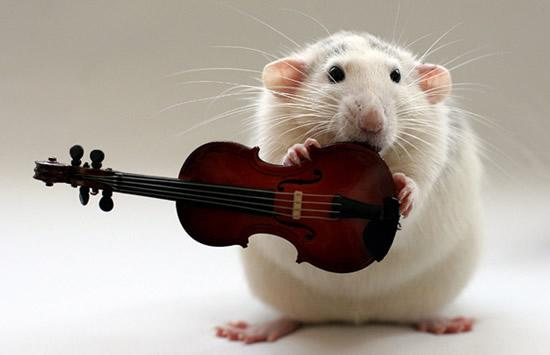 Amazing Musical School For Talented Rats (5)
