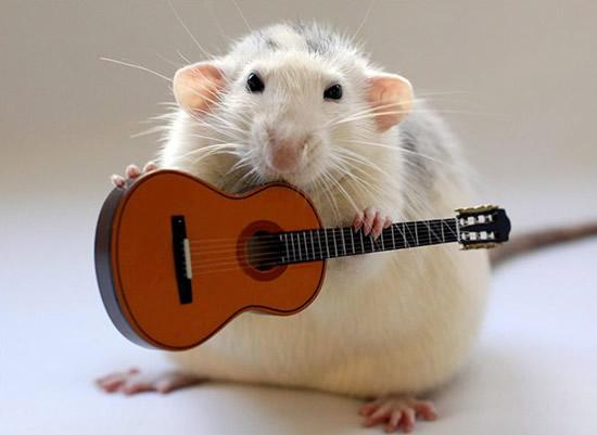 Amazing Musical School For Talented Rats (7)