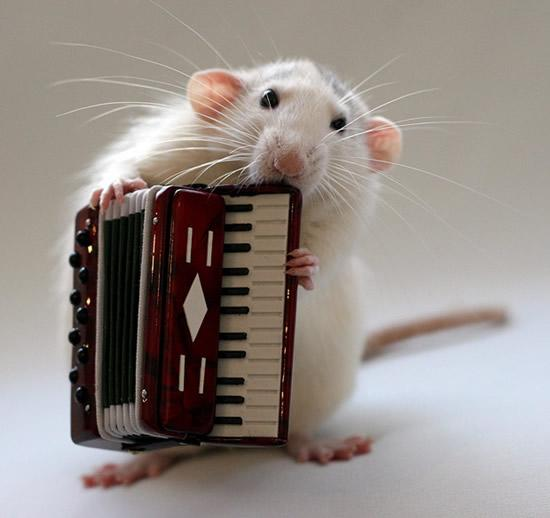 Amazing Musical School For Talented Rats (8)
