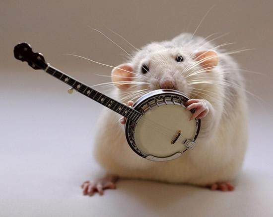 Amazing Musical School For Talented Rats (9)