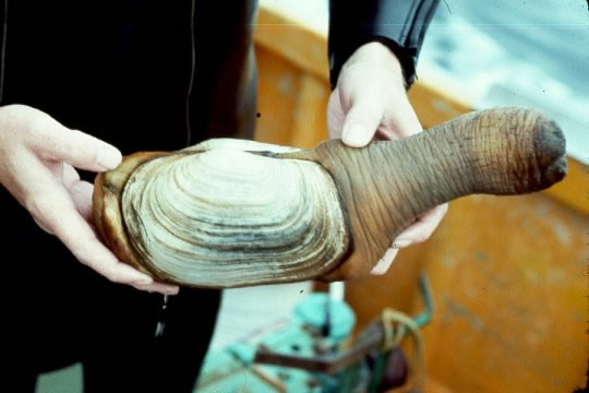 Buy Fresh Seafood In Asia And Get The Largest Clam In The World (2)