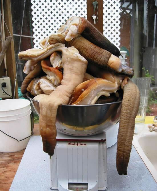 Buy Fresh Seafood In Asia And Get The Largest Clam In The World (4)