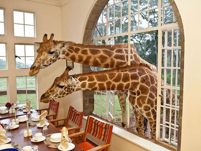 Giraffe Manor, Kenya 24 Amazing Hotels You Should Visit Before You Die