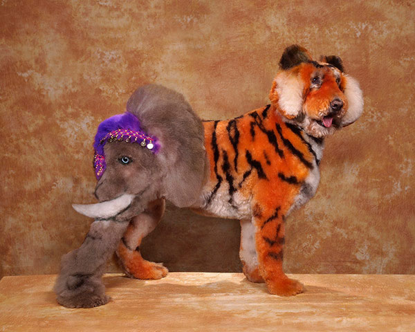 WTF 25 Worst Pet Cuts Ever (10)
