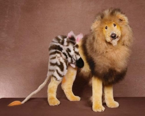 WTF 25 Worst Pet Cuts Ever (5)