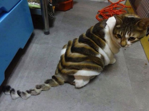 WTF Animal Grooming 25 Worst Pet Cuts Ever (3)