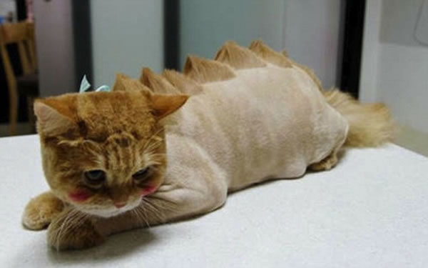 WTF Animal Grooming 25 Worst Pet Cuts Ever (4)