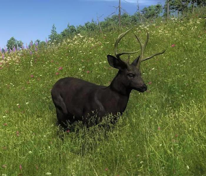 Melanistic Whitetail Deer Online Photo Books 21 ...