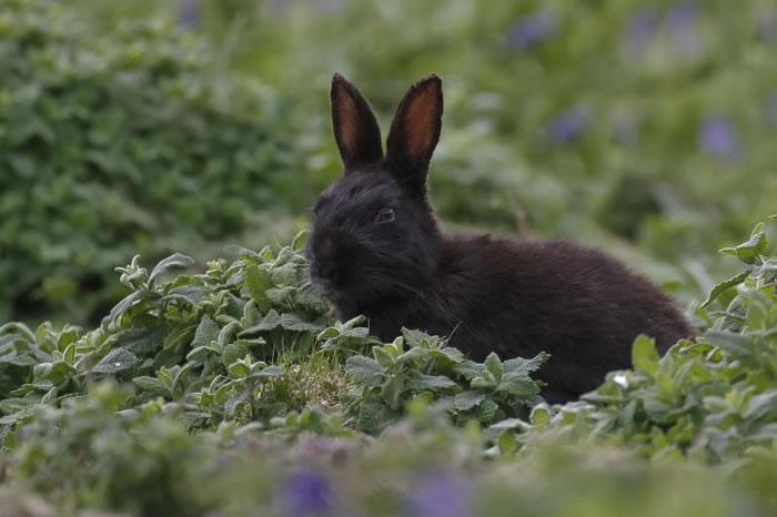 13 Rabbit - 21 Melanistic (All Black) Animals