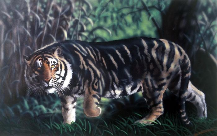 black tiger animal - photo #40