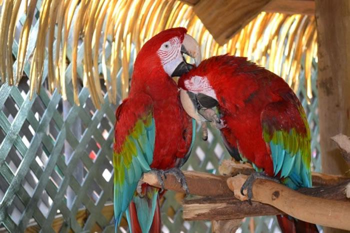 18. Parrots by trifatlete