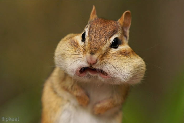 3. Smile For The Camera - Hilarious High Resolution Images Of Animals Making Funny Faces