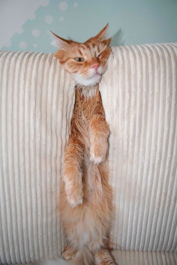30 Cats And Dogs That Have No Idea How To Use House Furniture (22)