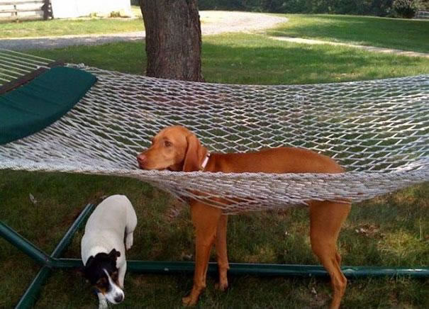 30 Cats And Dogs That Have No Idea How To (6)