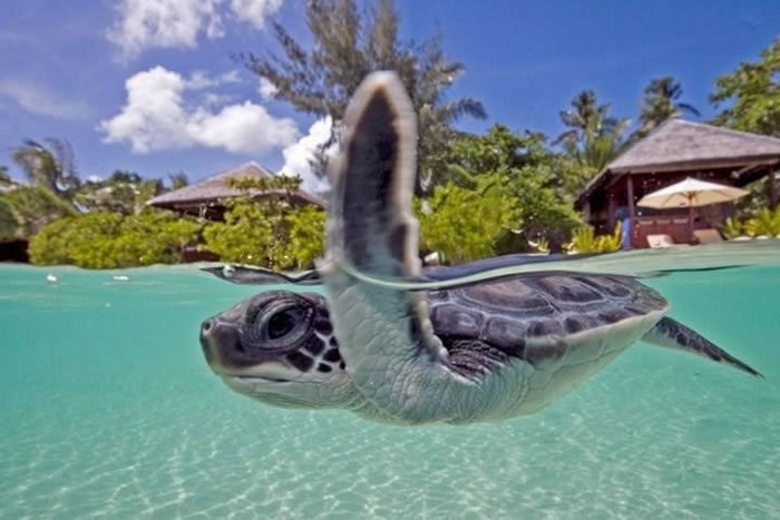 35 Clearest Waters In The World To Swim In Before You Die - Part 2 Readers Choice 10