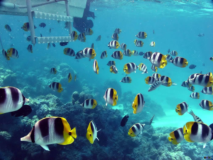 35 Clearest Waters In The World To Swim In Before You Die - Part 2 Readers Choice 6