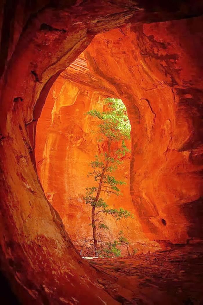 Boynton Canyon, USA