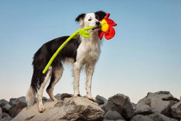 Creative And Funny Dog Stock Photography Pictures 2