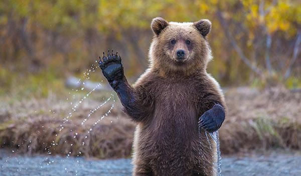 Behavior Analysis - Are These Bears Or Humans 1
