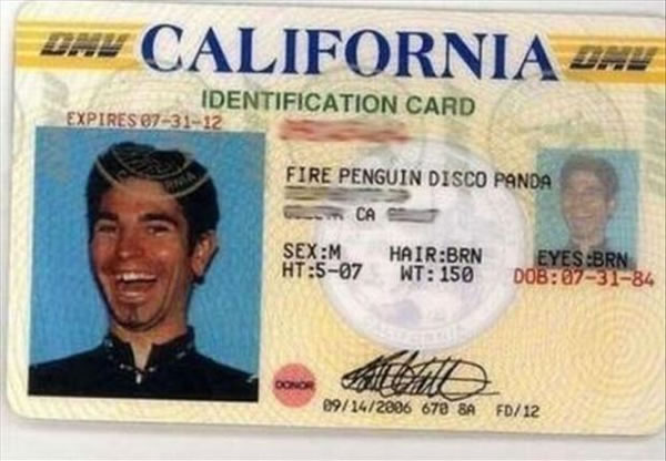 People Who Need To Seriously Consider A Name - Fire Penguin Disco Panda