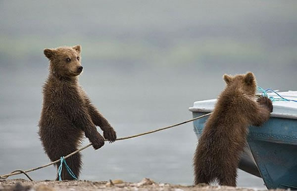 Behavior Analysis - Are These Bears Or Humans 2