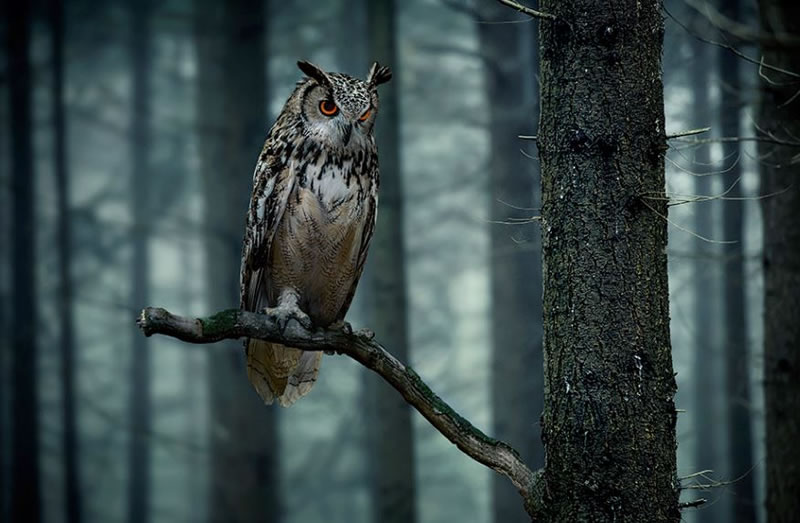 10 Amazing Owl Photos To Take Your Breath Away (10)