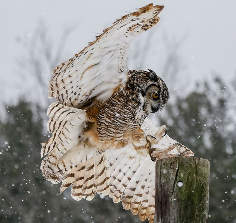 10 Amazing Owl Photos To Take Your Breath Away (2)