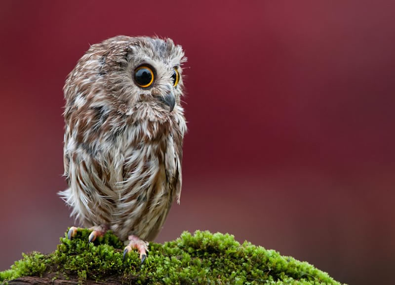 10 Amazing Owl Photos To Take Your Breath Away (3)