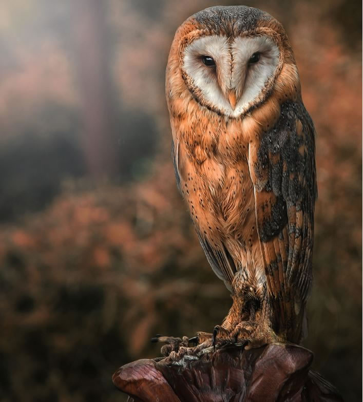 10 Amazing Owl Photos To Take Your Breath Away (4)
