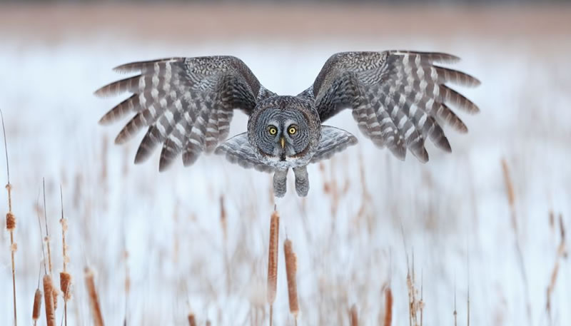 10 Amazing Owl Photos To Take Your Breath Away (5)