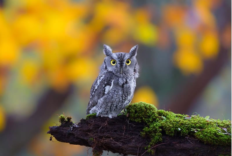 10 Amazing Owl Photos To Take Your Breath Away (7)