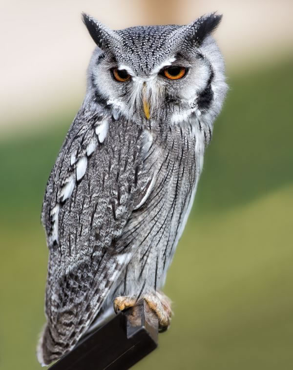 10 Amazing Owl Photos To Take Your Breath Away (8)