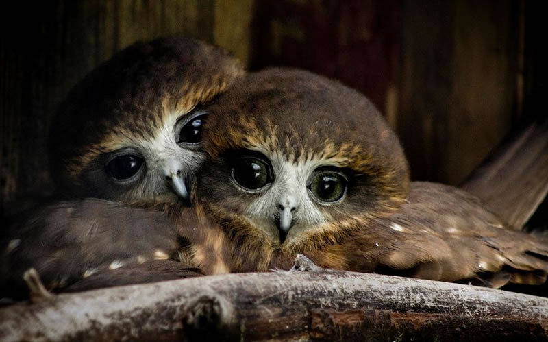 10 Amazing Owl Photos To Take Your Breath Away (9)