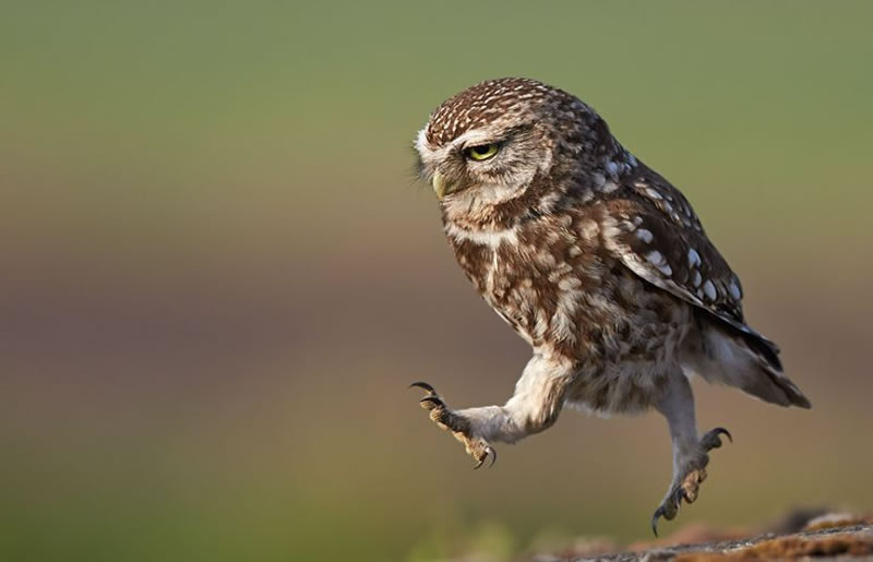 10 Amazing Owl Pictures To Take Your Breath Away (1)