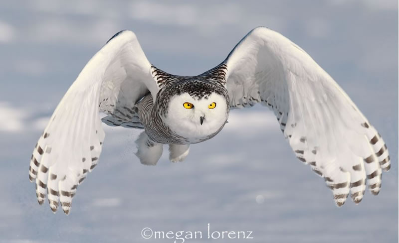 10 Amazing Owl Pictures To Take Your Breath Away (10)