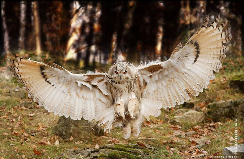 10 Amazing Owl Pictures To Take Your Breath Away (11)