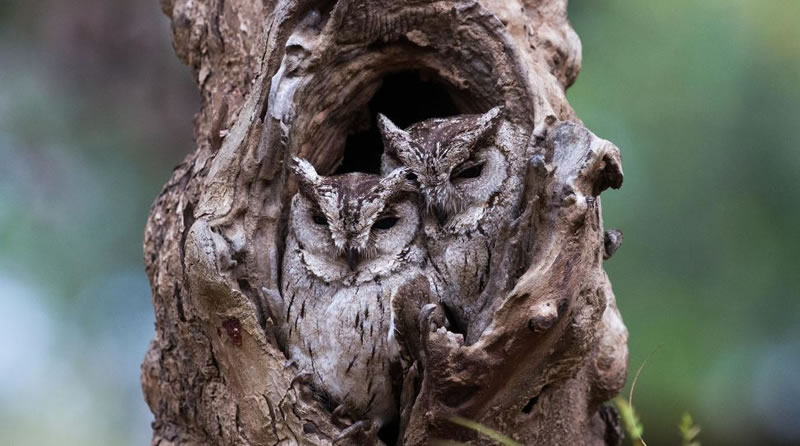 10 Amazing Owl Pictures To Take Your Breath Away (2)