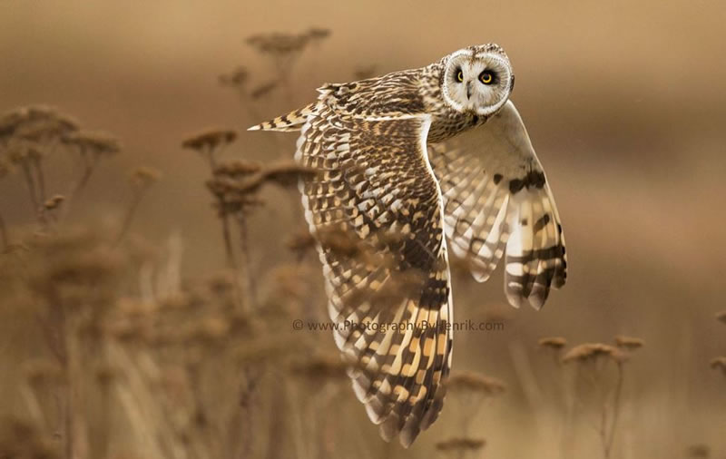 10 Amazing Owl Pictures To Take Your Breath Away (4)