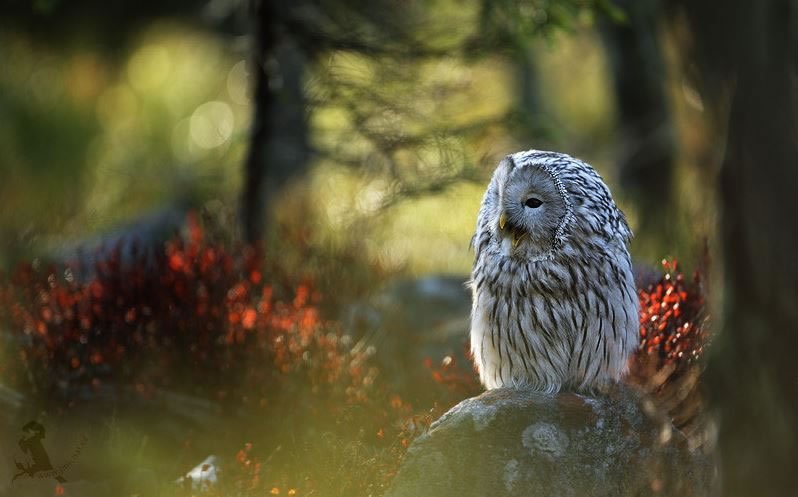 10 Amazing Owl Pictures To Take Your Breath Away (5)
