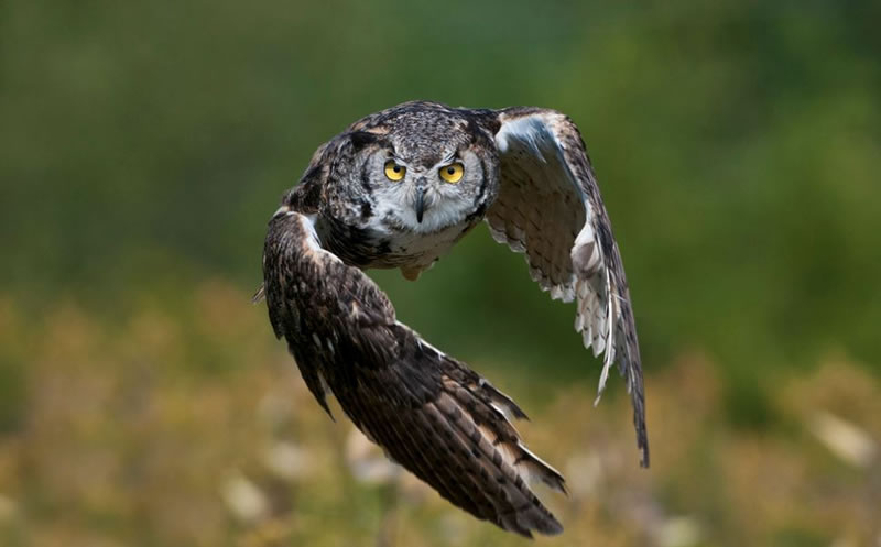 10 Amazing Owl Pictures To Take Your Breath Away (6)