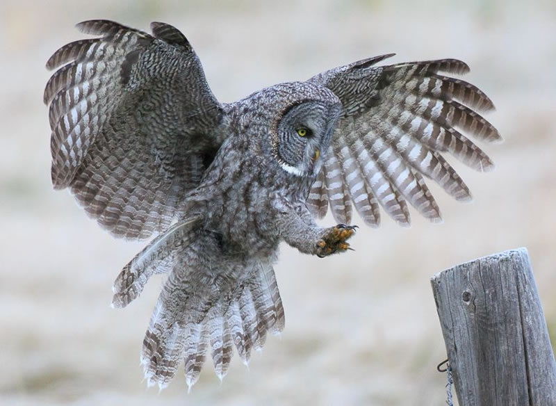 10 Amazing Owl Pictures To Take Your Breath Away (7)