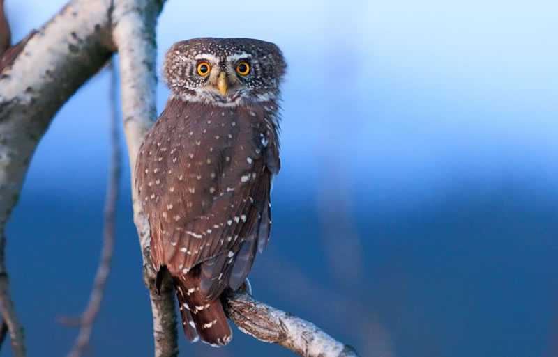 10 Amazing Owl Pictures To Take Your Breath Away (8)