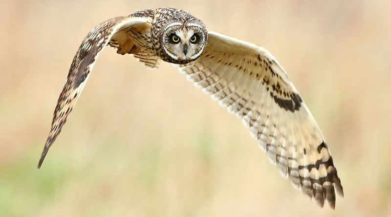 10 Amazing Owl Pictures To Take Your Breath Away (9)
