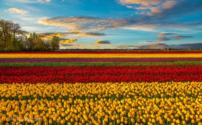 10 Spectacular Places To Visit During Spring Time 3
