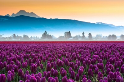 10 Spectacular Places To Visit During Spring Time