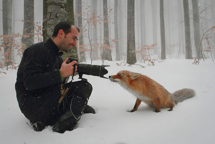 22 fox Pictures That Will Make You Love With These Bushy Tailed Animals (15)
