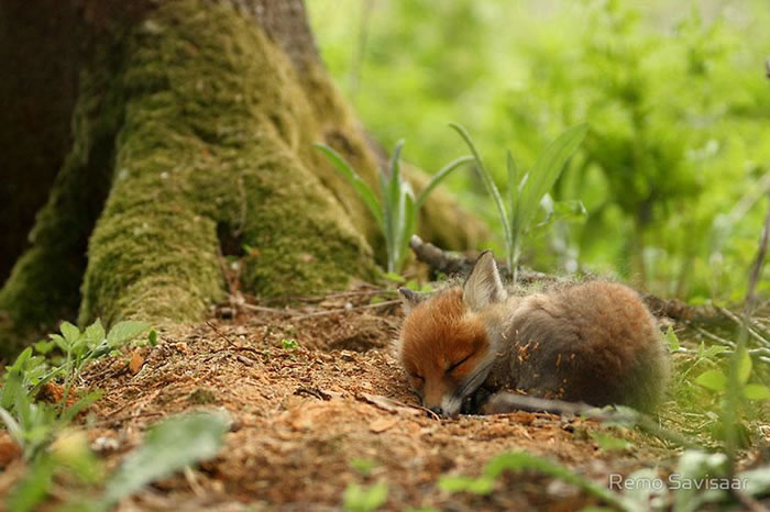 22 fox Pictures That Will Make You Love With These Bushy Tailed Animals (8)